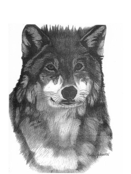 Pencil Perfect Wolf